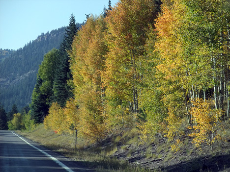 Autumn Colors in Conejos Canyon
