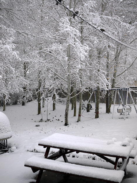 Snow in the back yard.