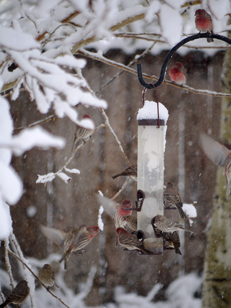 Lots of birds at the feeder despite the snow.