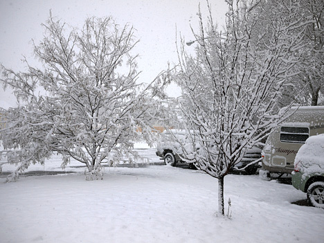 Snow in the front yard.